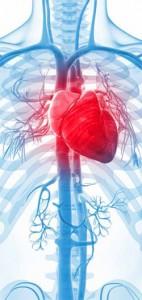 kalp_ve_damar_kitapcik-2