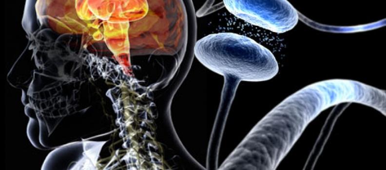 Serotonin Nədir və Təbii Yollarla Necə Artırılır